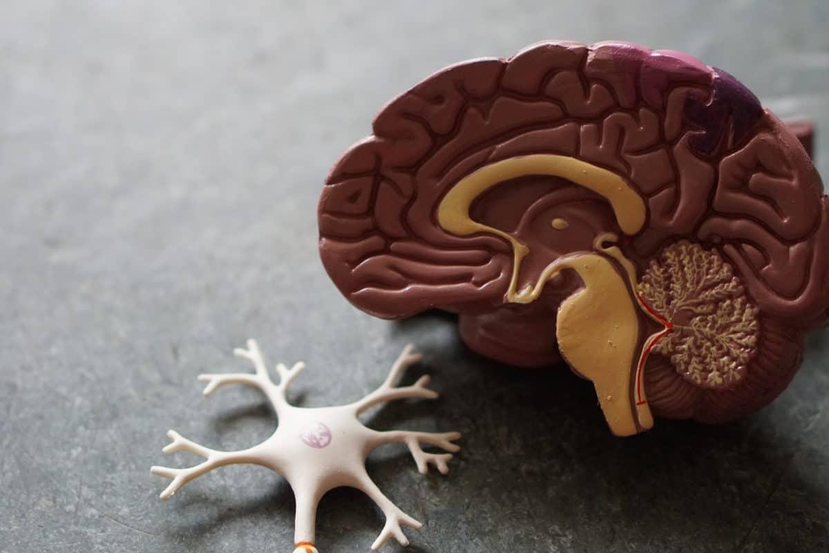 Czy wiesz, że brak snu znacząco niszczy mózg?